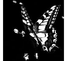 le papillon Photographic Print
