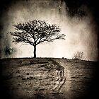 Hilltop Tree by Carlos Restrepo