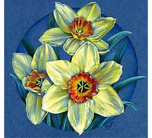 Daffodils - the joys of spring  Photographic Print
