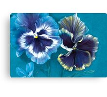 Pansy study Canvas Print
