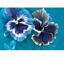 Pansy study Photographic Print