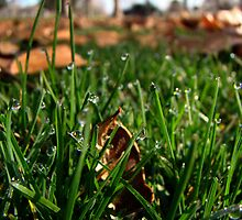 Dew Drops on Grass Blades by atoth