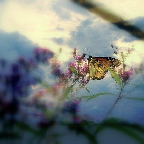Renewal  / Resurrection. by Rick  Todaro
