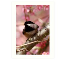 Curious Chickadee Perched Before Pink Blossoms Art Print