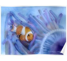 Clownfish And The Sea Anemone Poster