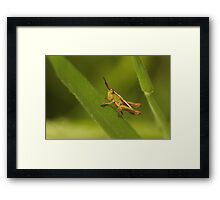 Tiny Hopper Framed Print