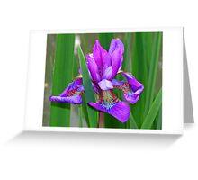 An Iris taken in Monet's Garden in France Greeting Card