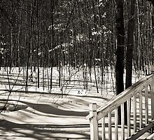Shade in Winter by Kathy Nairn