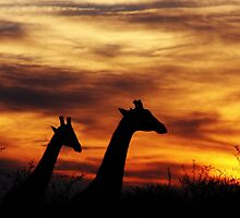 Sunset stroll by Lauren Banks
