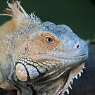 Icy Iguana by Speedster502