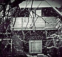 Spring Tried But Winter Was Still Stronger by Mojca Savicki