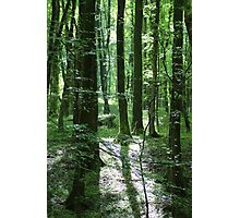 Magic In The Woods In Dorset Photographic Print