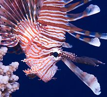Lion Fish by wildshot