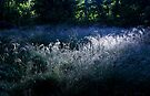 Morning Dew by SWEEPER