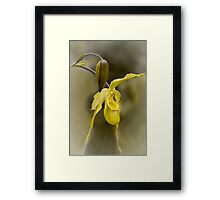 First Bloom - Orchid Flower Framed Print