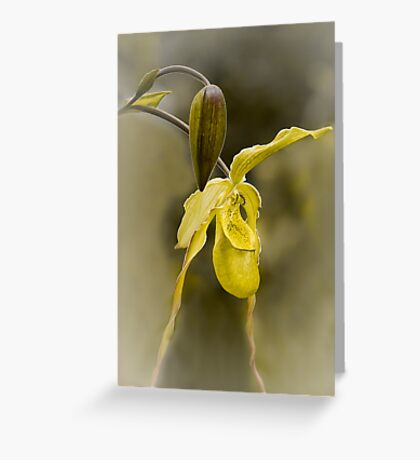 First Bloom - Orchid Flower Greeting Card