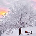 Winter Landscape by Mario Curcio