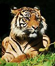 The Regal Tiger  by Elaine  Manley