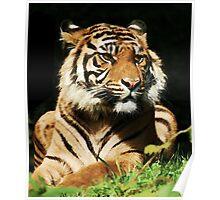 The Regal Tiger  Poster