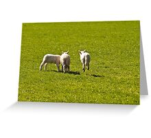 Lamb Jumping off the field Greeting Card