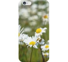 Oxeye Daisies in a field iPhone Case/Skin