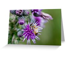Honey Bee on Thistle Flower Greeting Card