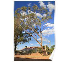 Woosang farm Riverena NSW Poster