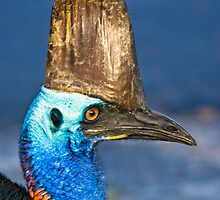 Cassowary - Etty Bay far north Queensland by Jenny Dean