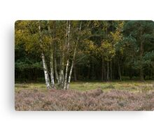 Cannock Chase Staffordshire England Canvas Print
