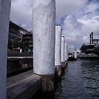 White posts along the harbour by pyko