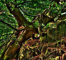 Old beech tree in wind by Gabor Pozsgai
