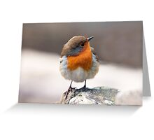 Robin on a cold winter day  Greeting Card