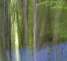 The Mystical Bluebell Wood by Nick Jenkins