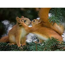 Baby Squirrel Kiss Photographic Print