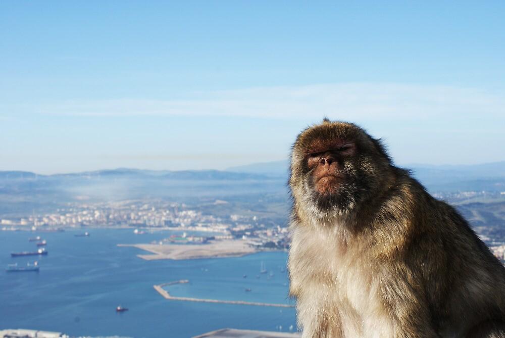 Gibraltar Monkey by gecko2