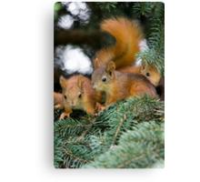 Baby Squirrel Play Canvas Print