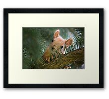 Baby Squirrel in the fur tree Framed Print