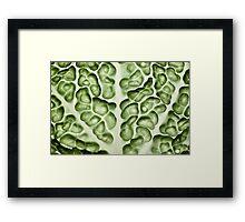 Close-up of a backlit savoy cabbage Framed Print