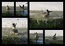 Yellow-rumped Warbler ~ ♫Splish-Splash, I am taking a Bath♫ by Kimberly Chadwick
