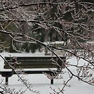 Winter Bench by LizzieMorrison