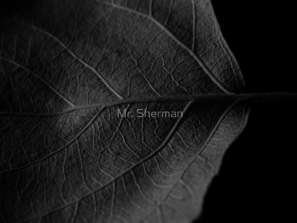 Untitled by Mr. Sherman