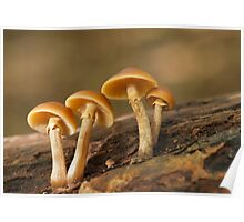Toadstools at Forest Farm Nature Reserve Cardiff Poster