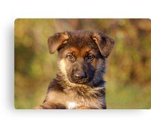 Black & Tan Puppy Canvas Print