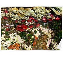 'Blooming Sealife' Poster