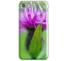 Common Knapweed Flower  iPhone Case/Skin