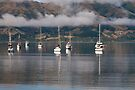 Akaroa Harbour by Werner Padarin