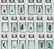 Beetle bottles by applemoth