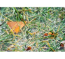 Iced Over  Photographic Print