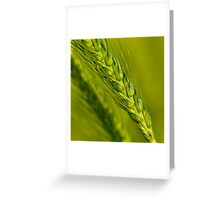 Study of Barley Crop Greeting Card