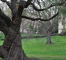 Tree in Melbourne by LimitlessDepth
